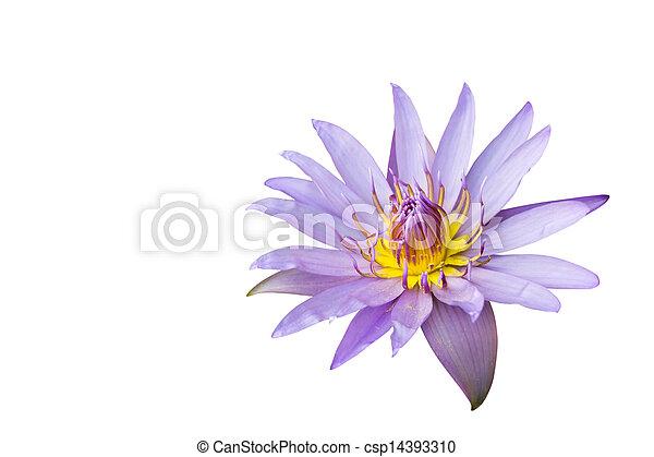 Lotus isolated on white background - csp14393310