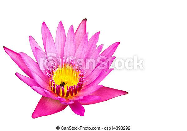 Lotus isolated on white background - csp14393292