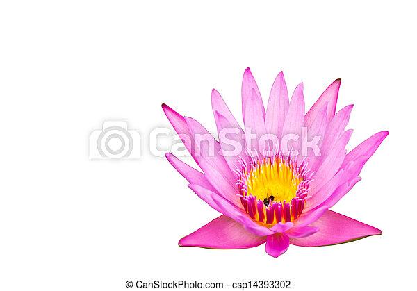 Lotus isolated on white background - csp14393302