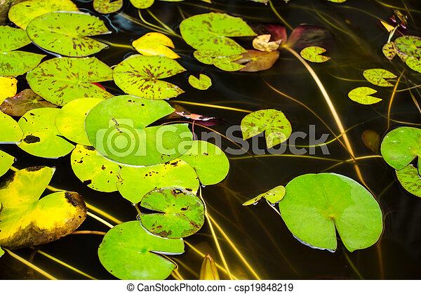 lotus leaf - csp19848219