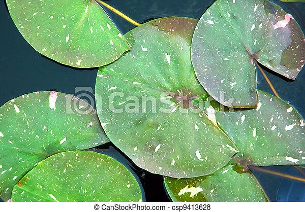 Lotus leaf - csp9413628