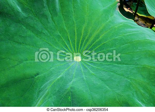 Lotus leaf - csp36206354