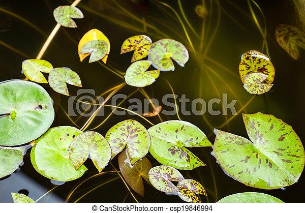 lotus leaf - csp19846994