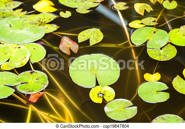 lotus leaf - csp19847804