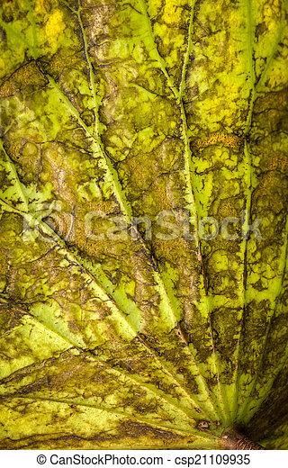 lotus leaf - csp21109935