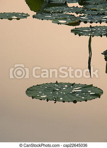Lotus leaf - csp22645036
