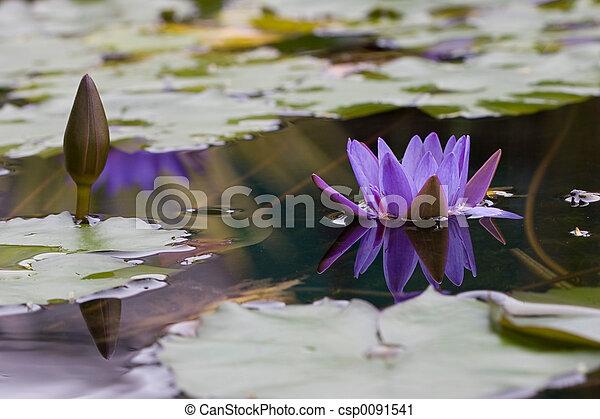 Lotus - csp0091541