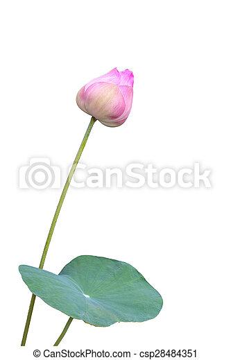 Lotus - csp28484351
