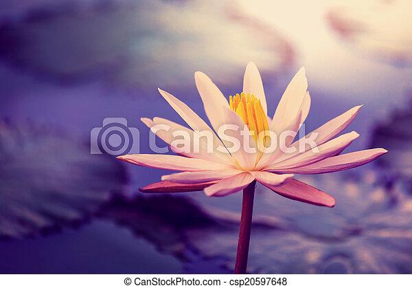 Lotus - csp20597648