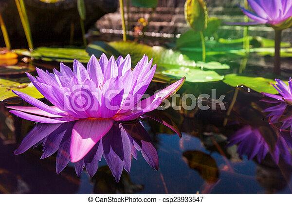 Lotus - csp23933547