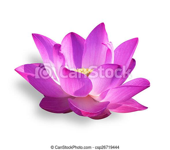 lotus - csp26719444