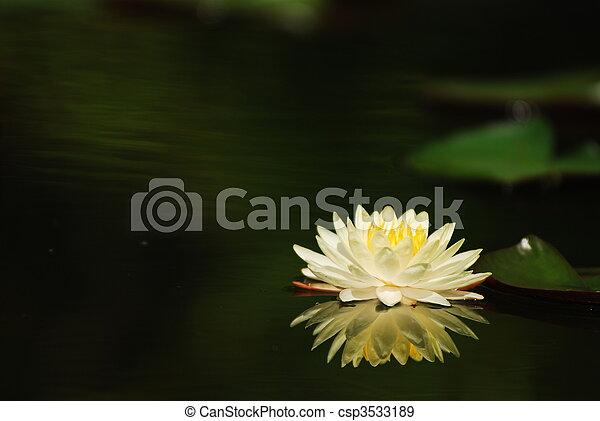 Lotus - csp3533189