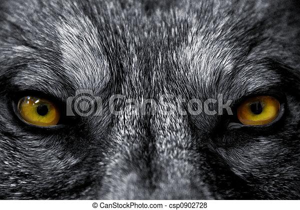 loup, yeux - csp0902728