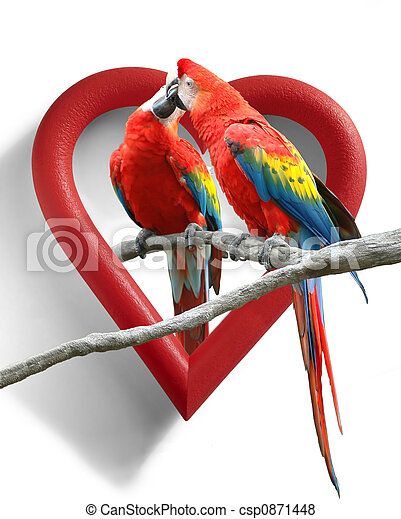 love birds a couple of kissing parrots with a heart shaped frame as