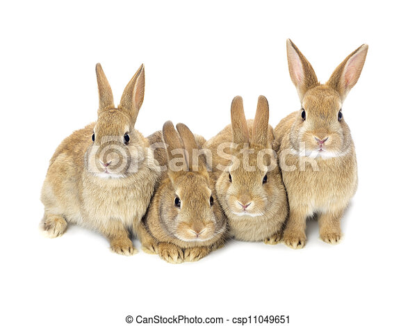 lovely baby bunnies - csp11049651