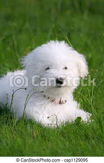 Lovely puppy - csp1129095