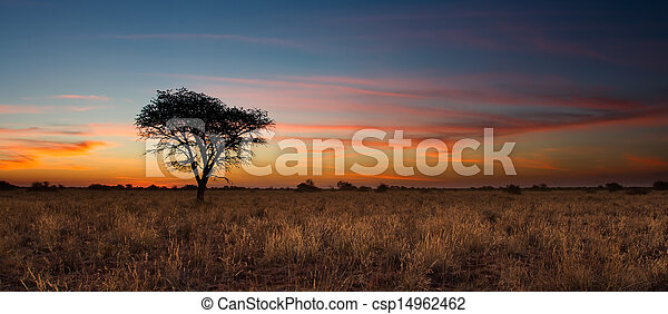 Lovely sunset in Kalahari with dead tree - csp14962462