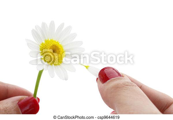 Loves me, loves me not - csp9644619