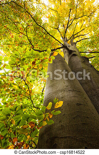 Low angle view of large trees - csp16814522