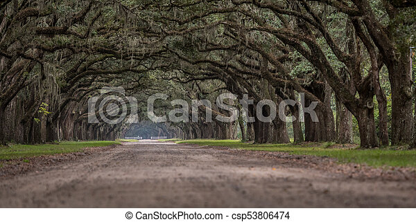 Low Angle View of Live Oak Trees - csp53806474