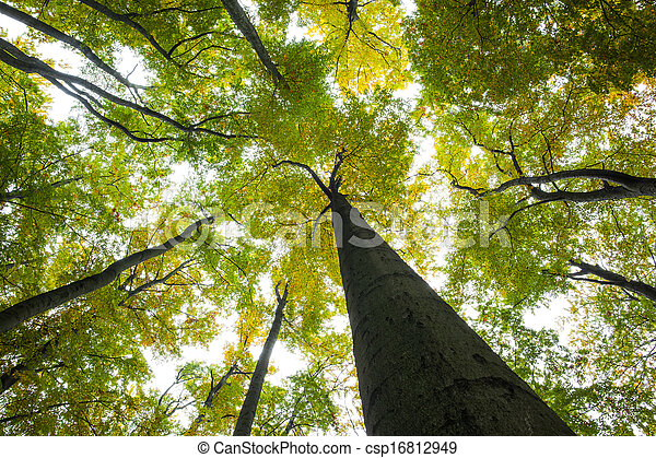 Low angle view of tall trees - csp16812949