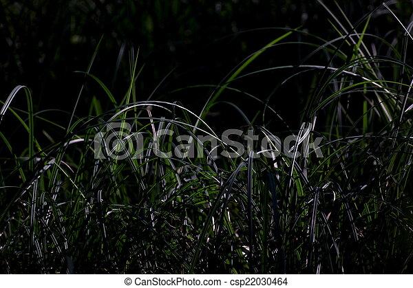 Low Key Grass - csp22030464
