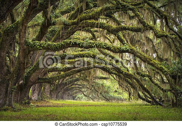 lowcountry, as, landschaftsbild, eiche, bäume, plantage, leben, wald, sc, charleston, eichen, allee, becken, süd carolina - csp10775539