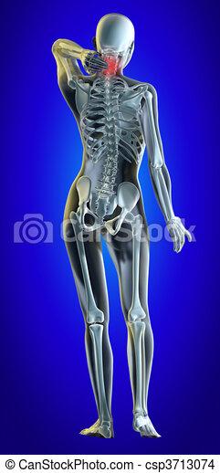 Lower spine - csp3713074