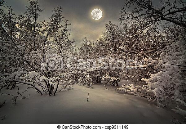 luar, madeira, inverno, noturna - csp9311149