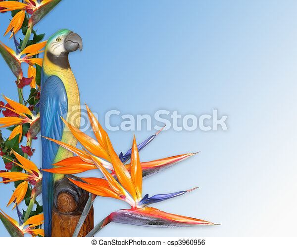 luau invitation tropical background image and illustration