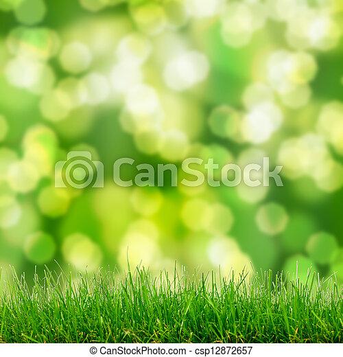 Hierba verde y luces bokeh - csp12872657