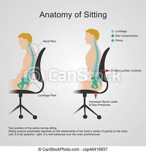 lumbar regio. Anatomy of sitting - csp46416937