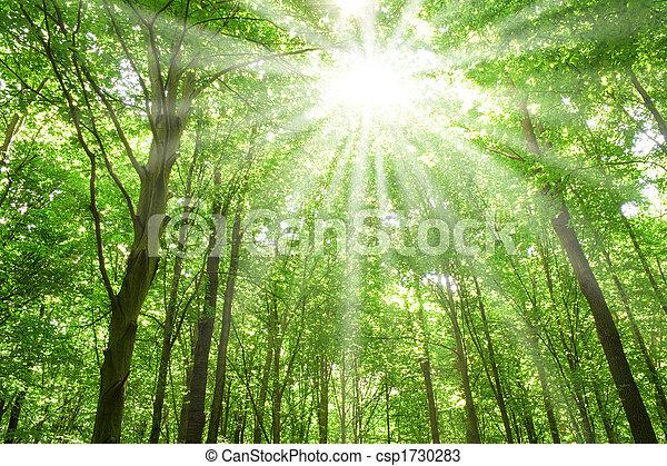 lumière soleil, forêt, arbres - csp1730283