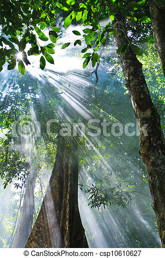 lumière soleil, nature - csp10610627