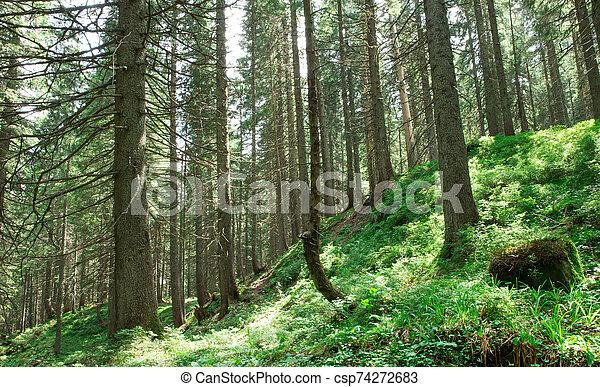 lumière soleil, vert, arrière-plans, arbres., bois, nature, forêt - csp74272683
