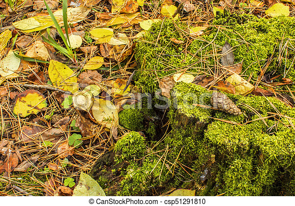 lump on an old stump in an autumn forest standing on the ground covered with fallen autumn leaves - csp51291810