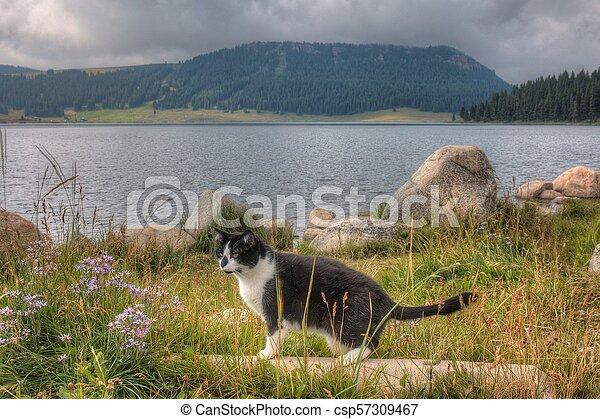 Luna the Adventure kitty Explores the World - csp57309467
