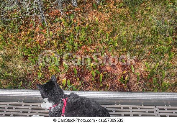 Luna the Adventure kitty Explores the World - csp57309533