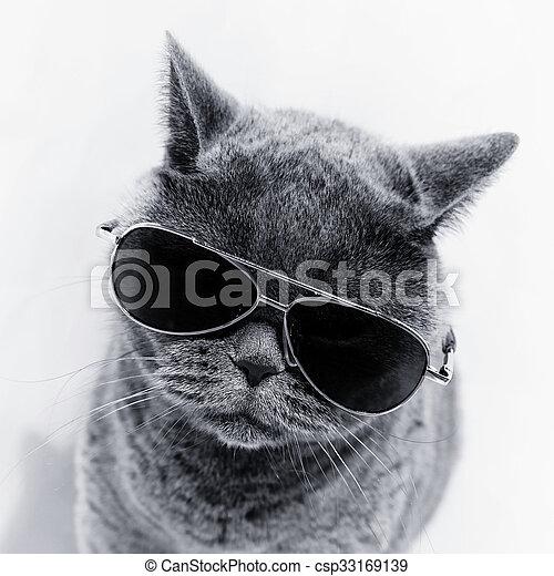 Lunettes soleil port, chat. Porter, gris, lunettes soleil ... 74865db1b9eb