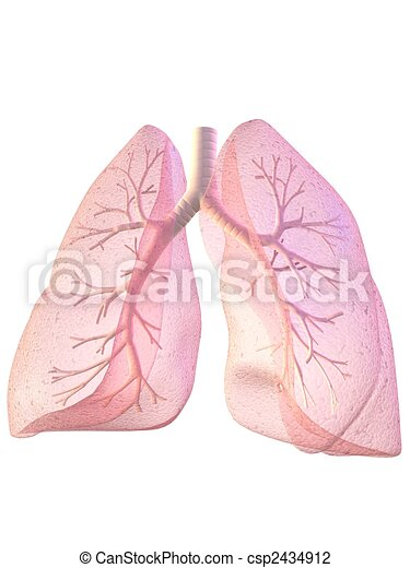 lung and bronchi - csp2434912