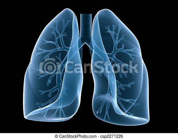 lung and bronchi - csp2271226