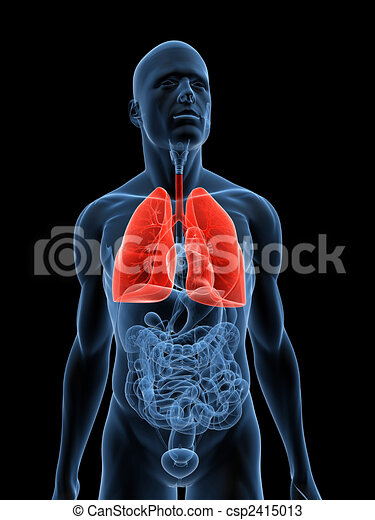 lung - csp2415013