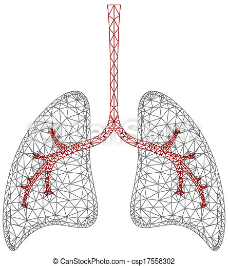 Lung Graphic - csp17558302
