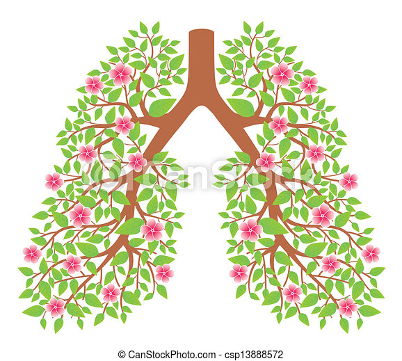 lungs healthy - csp13888572