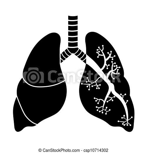Lungs in Black and White - csp10714302