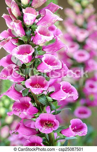 Lupin Fleurs Jardin Fleur Lupin Rose Journee Digitale Camelot