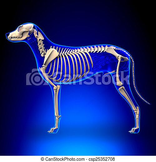 Lupus, esqueleto, familiaris, -, perro, anatomía, canis, vista lateral.