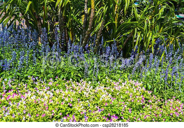 Lush landscaped garden - csp28218185