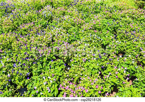 Lush landscaped garden - csp28218126