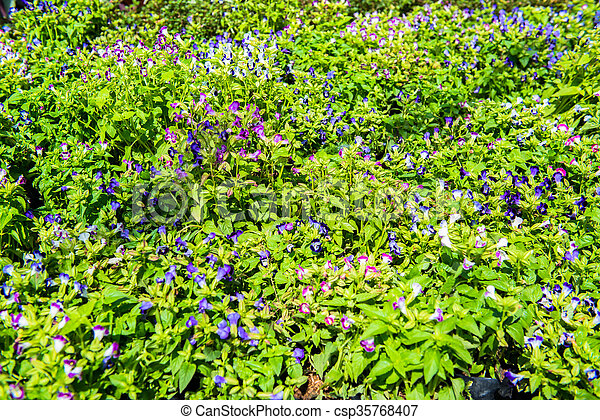 Lush landscaped garden with flowerbed and colorful plants - csp35768407